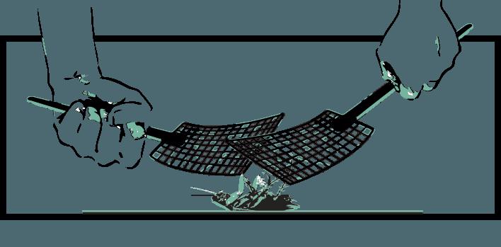 cucarachas características y como matarlas