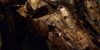 nido de cucarachas