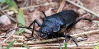 prevenir cucarachas