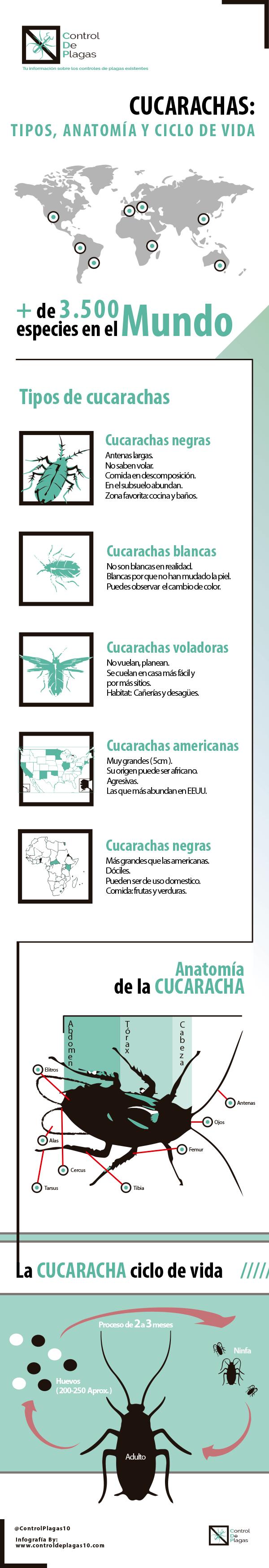 tipos cucarachas e información infografía