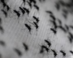 enjambre de mosquitos atrapados