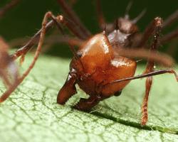 hormiga-cortando-hojas-min