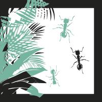 hormigas-amazonas