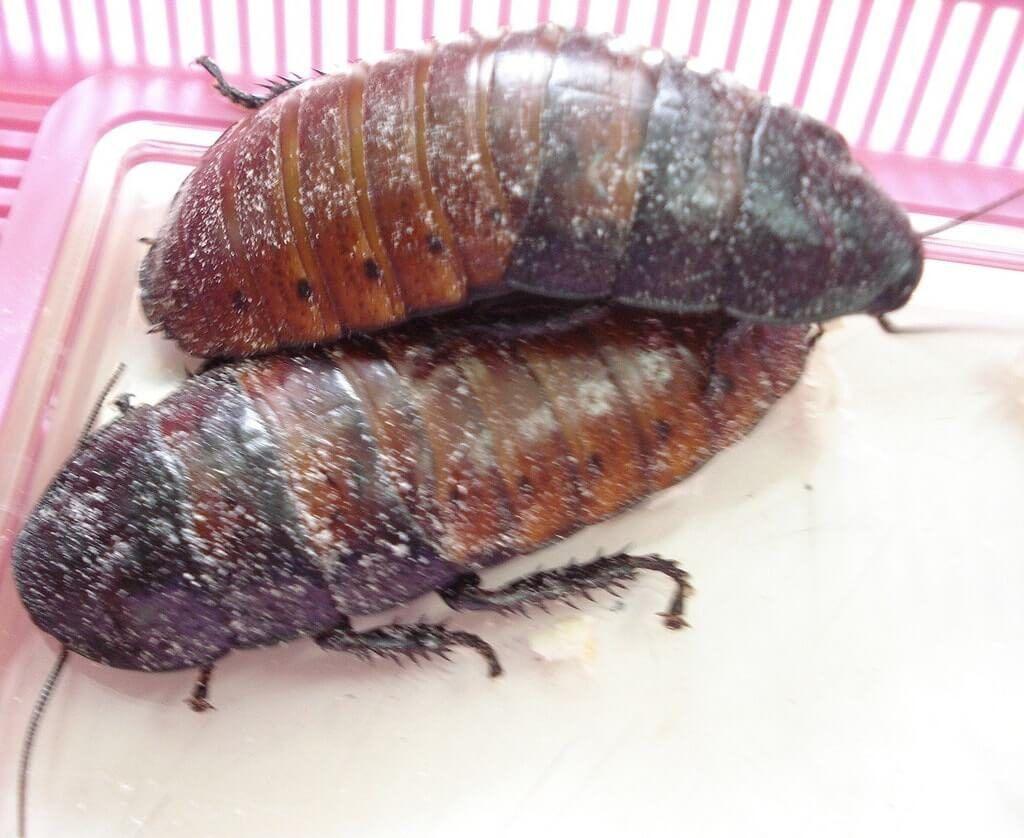 Cucarachas eliminar la plaga y nido sin t xicos en casa - Que hacer contra las cucarachas ...