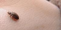 personas plagadas de pulgas