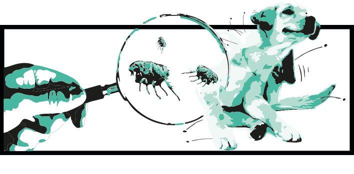 Información sobre pulgas