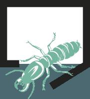 termita-subterranea