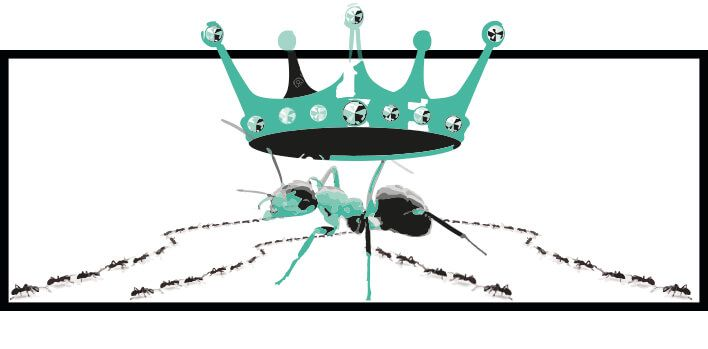 toda la información sobre la hormiga reina