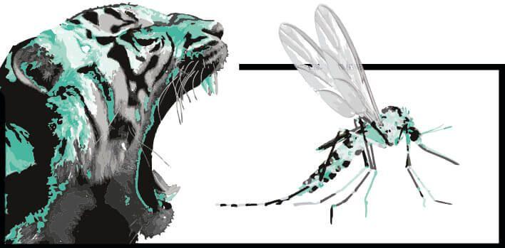toda la información sobre el mosquito tigre