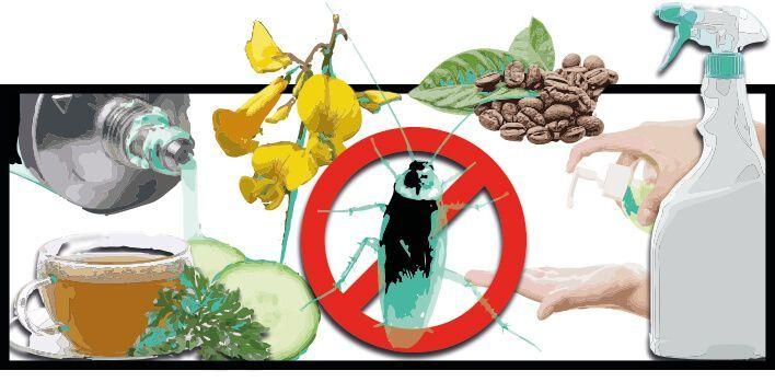 10 Remedios Caseros Para Eliminar Cucarachas Control De Plagas 10