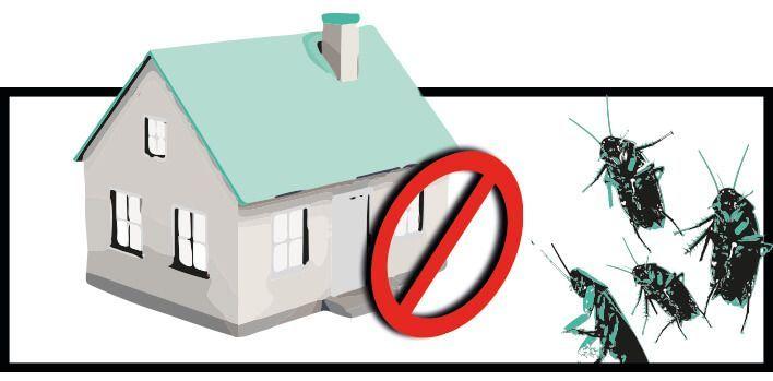evitar cucarachas casa con trampas y remedios naturales caseros