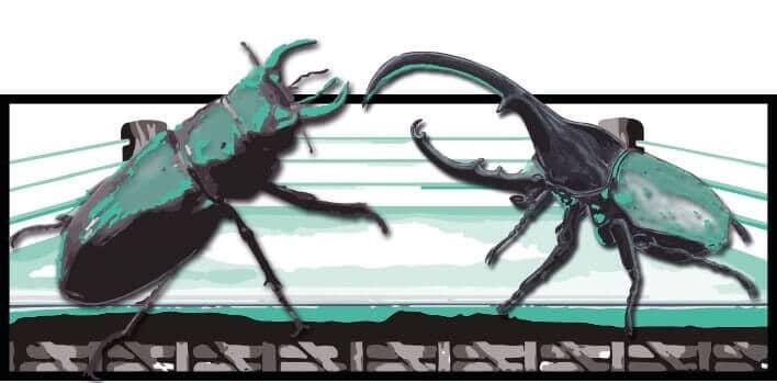 La mejor información sobre los escarabajos y remedios caseros para eliminarlos