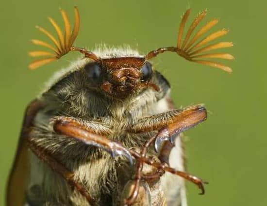 remedios caseros para eliminar escarabajos