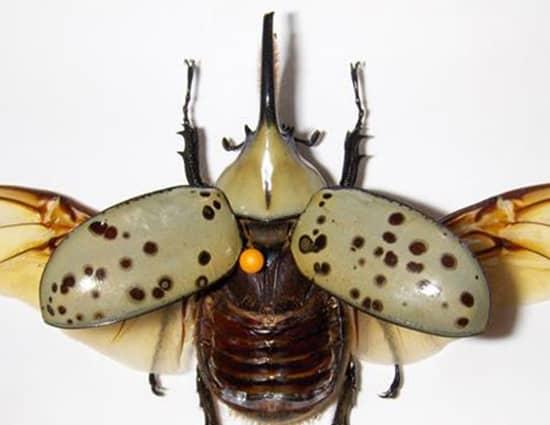 tipos y clases de escarabajos diferentes