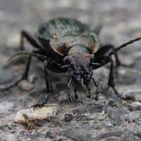 trucos y productos eficaces contra los escarabajos
