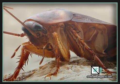 consejos practicos de eliminacion e informacion sobre las cucarachas