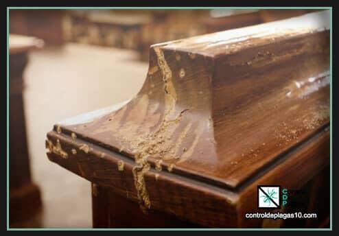 cuidados de la madera atacada por termitascuidados de la madera atacada por termitas