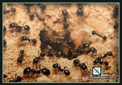 hormigas en el hormiguero