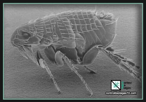 los mejores repelentes para eliminar pulgas definitivamente
