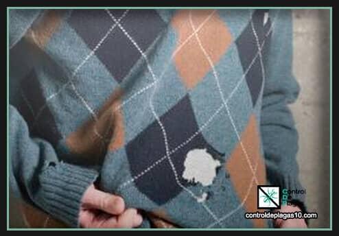 polillas en casa y en la ropa