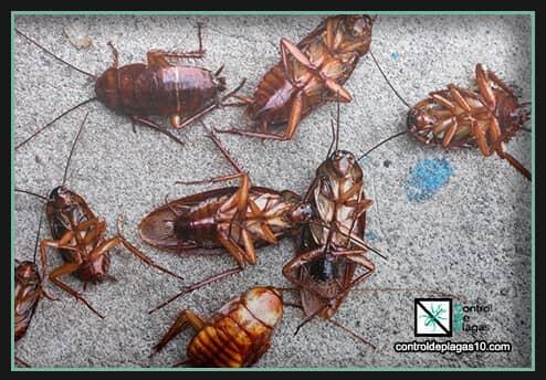 remedios efectivos para eliminar cucarachas para siempe