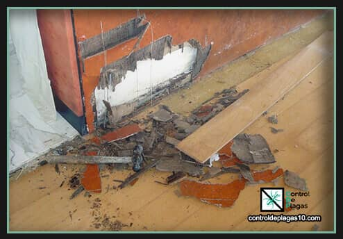 termitas en pareces de madera
