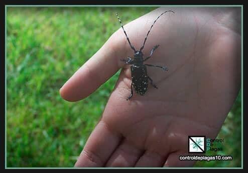 trucos para eliminar escarabajos